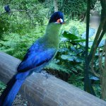 South African based Knysna Loorie Bird (not sure if I spelled that right)-gorgeous