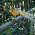 Pheasant...spectacular