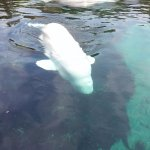 Mystic Aquarium Foto
