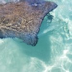 Crystal clear waters & awesome stingrays.
