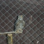one of an assortment of owls to see