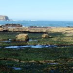 Tide pools and Gull Rock during low tide right below Otter Crest