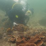 One of the local Wobbegong