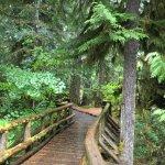 Beautiful bridge on the Waterfall Trail