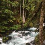 The McKenzie River