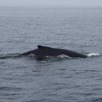 Capt Bill & Sons Whale Watch Foto