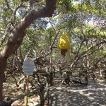 Foto de Pirangi Cashew Tree