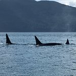 Pod close to our boat, spent nearly an hour watching these great animals