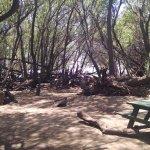 Camp Olowalu 사진