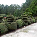 at Pearl Fryar Topiary