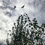 Creamer's Field Migratory Waterfowl Refuge照片