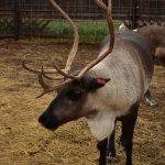 Reindeer Farm Φωτογραφία