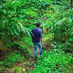 Plantation Walk
