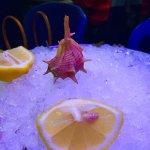 Photo of Aquarium L'