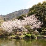 春  藤白山脈を借景として咲き誇る桜