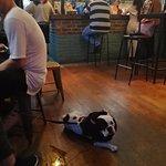 les chiens sont les bienvenus chez brewdog