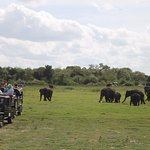 elephants trying to pass through the jeeps