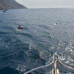 Dolphin Watch Tour 100% views