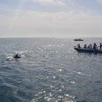 Observação de golfinhos, saídas diárias do Porto de Sesimbra!