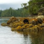 Photo of Adventure Tofino - Wildlife Tours