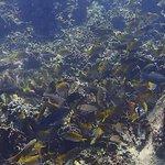 Photo of Calypso Diving