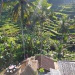 Rice Terrace Pic 2