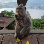 Monkey stop on our way to temple