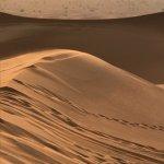 Photo of Desert Safari Dubai