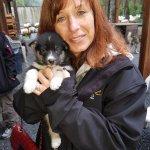 Husky Puppy 2