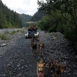 Dog Sled Ride - On Wheels