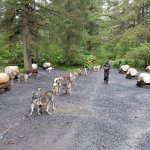 Departing on Dog Sled Ride