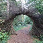 Beech portal in the Walk Wood and sculpture trail