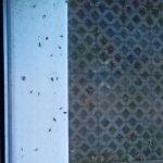Vogeldreck an der Fensterbank