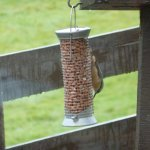 Elusive Nuthatch on feeder outside breakfast room