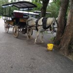 Photo de Killarney Horse & Carriage Tours