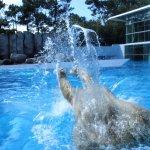 saut arrière de l'ours polaire