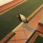 moqueta en pasillo