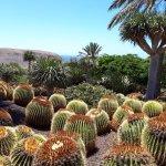 Foto de Oasis Park Fuerteventura