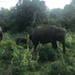 Foto de Kaudulla National Park