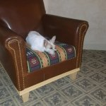Honey makes herself at home during her first trip to Buffalo Thunder in Santa Fe, New Mexico