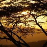 Anochece en el serengeti