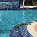 thirsty lizard drinking water from the pool