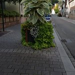 IMG_20170918_170652502_large.jpg