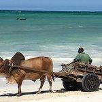 Photo of Melia Zanzibar