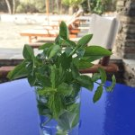 Sweet host picked me fresh herbs to grace my table