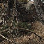 Photo de Point Lobos State Reserve
