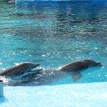 Siegfried & Roy's Secret Garden and Dolphin Habitat Foto
