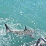 Photo de Great White Shark Tours