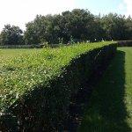 Untrimmed Hedges