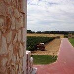 Vista del viñedo, desde la terraza del restaurante, en el primer piso